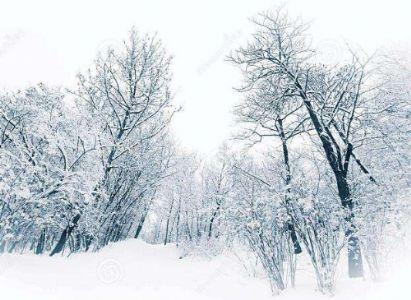 麦瑞散文《雪花情缘》