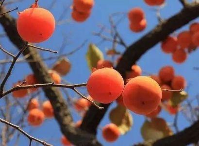 郭小川诗歌《春天的后面不是秋》