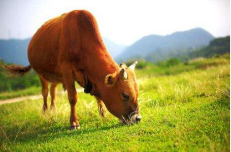 应试阅读:《牛的写意》阅读理解真题(附答案)